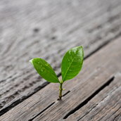 Young plant Wallpaper